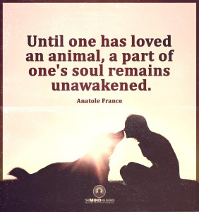 pets awaken your soul
